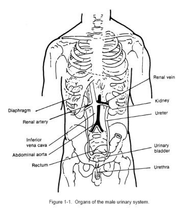 The Genitourinary System I Distance Learning Course